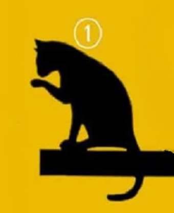 Кошка No1