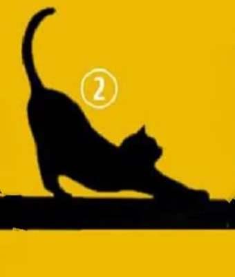 Кошка No2