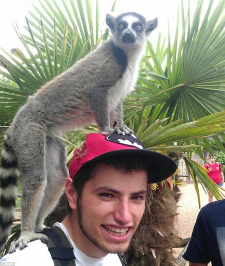 Похоже, этот парень понравился лемуру!
