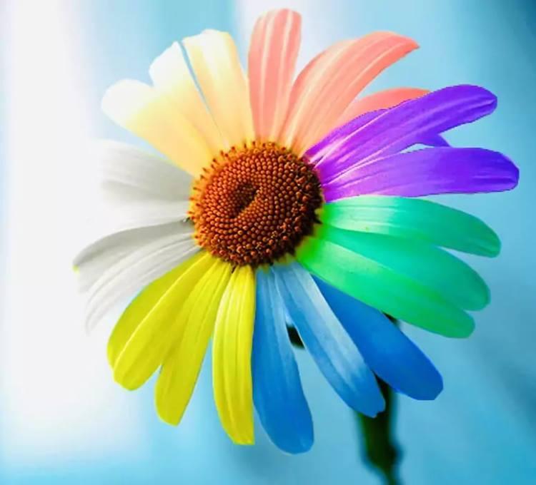 Психологический тест «Гадание на ромашке»: выбрав лепесток, вы узнаете что вас ждёт в любви в ближайшем будущем