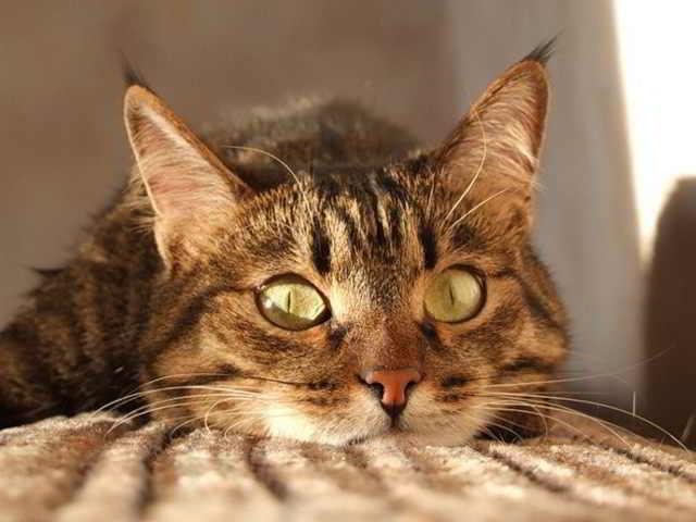 А Вам известно, что кошка является показателем благополучия?