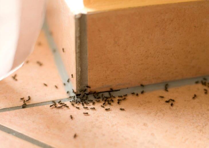 Избавит от муравьев