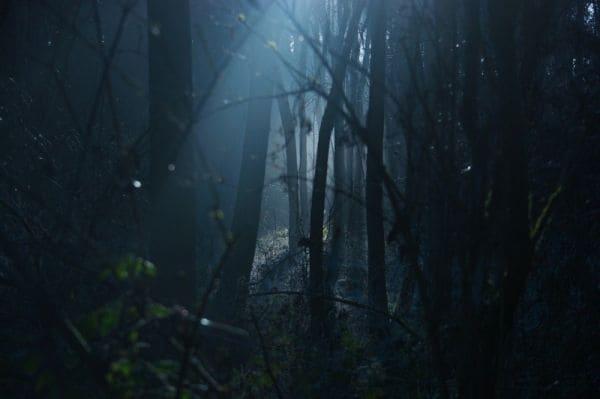 Дремучий темный лес