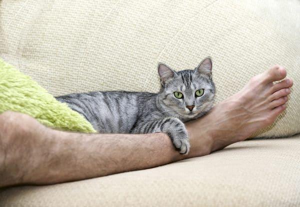 Почему кошка стала спать между ног?
