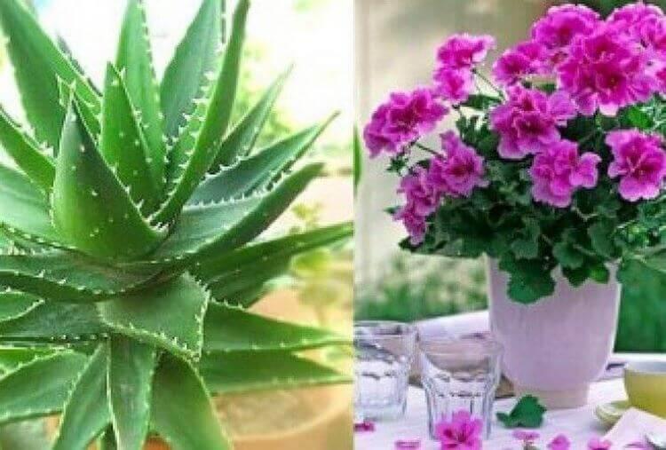 Четыре комнатных растения, которые должны быть в каждом доме