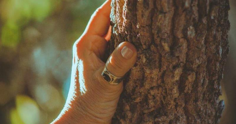 Никогда не сажайте эти деревья в своем дворе — они могут навлечь беду