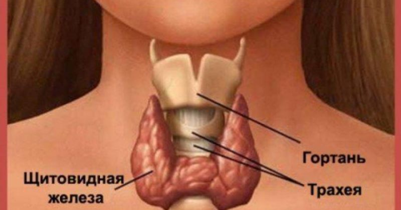 Первые признаки того, что ваша щитовидная железа не в порядке