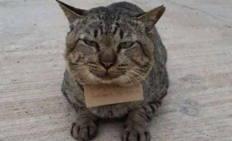 Домашний кот ушел из дома, а через 3 дня вернулся с запиской, что у него теперь долги