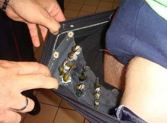 Служащие аэропорта не поверили своим глазам, увидев что он пытается провезти в штанах!